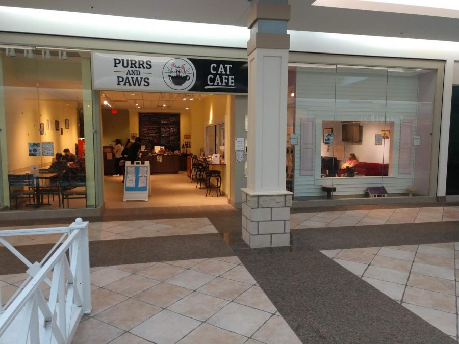 Purrs and Paws Cat Cafe: A Hair Away From Purrfection